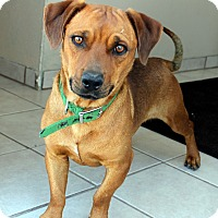 Adopt A Pet :: Shorty - Cedar City, UT