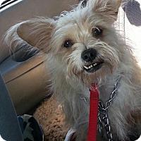 Adopt A Pet :: Doug - Phoenix, AZ