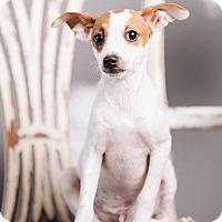 Adopt A Pet :: Cilantro - Portland, OR