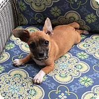 Adopt A Pet :: *Sebastien - PENDING - Westport, CT