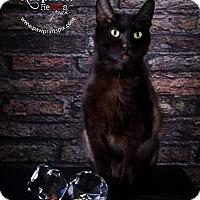 Adopt A Pet :: Raven - St. Charles, IL
