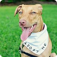 Adopt A Pet :: Havana - Gainesville, FL