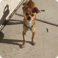 Adopt A Pet :: Vegas - Las Vegas, NV