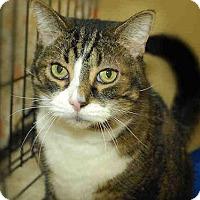 Adopt A Pet :: RAZZIE - Pittsburgh, PA