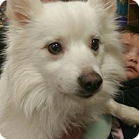 Adopt A Pet :: Keenai - Ogden, UT