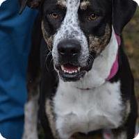 Adopt A Pet :: Potter - Bradenton, FL