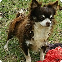 Adopt A Pet :: Chuck - Orlando, FL