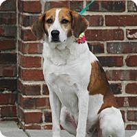 Adopt A Pet :: Teri - Summerville, SC
