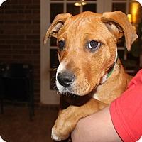 Adopt A Pet :: Louise - Alpharetta, GA