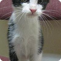 Adopt A Pet :: Triple Sec - Gary, IN