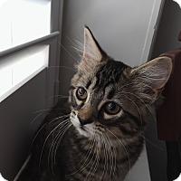 Adopt A Pet :: Didion - St. Louis, MO