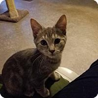Adopt A Pet :: Jewel - Brainardsville, NY