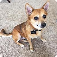 Adopt A Pet :: Bree - New Oxford, PA