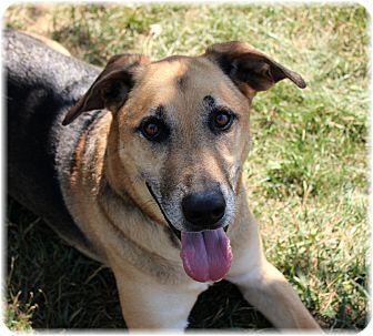 German Shepherd Dog Mix Dog for adoption in Welland, Ontario - Balto
