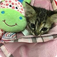 Adopt A Pet :: Sienna - Redding, CA