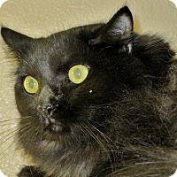 Adopt A Pet :: Channing - Georgetown, TX