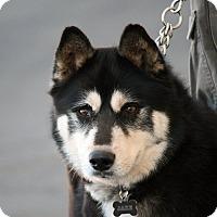 Adopt A Pet :: Jake - Palmdale, CA
