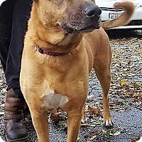 Shepherd (Unknown Type) Dog for adoption in Boston, Massachusetts - Emma