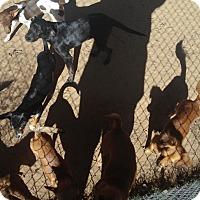 Adopt A Pet :: Buddy - Springtown, TX