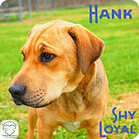 Adopt A Pet :: Hank - Washburn, MO