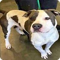 Adopt A Pet :: Dover-URGENT - Allen town, PA