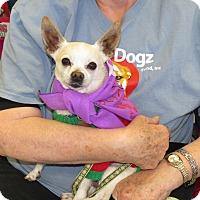 Adopt A Pet :: Mortimer - Scottsdale, AZ