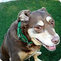 Adopt A Pet :: Cassiopeia - Bradenton, FL