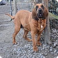 Adopt A Pet :: Julip - Pembroke, GA