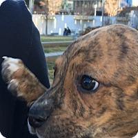 Adopt A Pet :: Agnes - Albemarle, NC