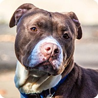 Adopt A Pet :: Princess - Port Washington, NY