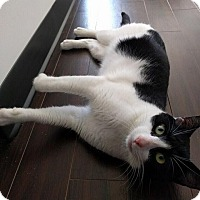 Adopt A Pet :: Homeboy - Gainesville, FL