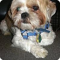 Adopt A Pet :: Chucky - Toronto, ON