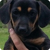 Adopt A Pet :: Pleasant Lake#3F - Orlando, FL