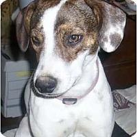 Adopt A Pet :: Sweet Pea - Glenpool, OK