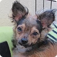 Adopt A Pet :: Sebastian - Tumwater, WA