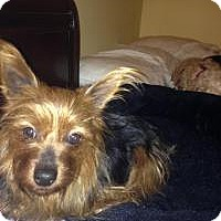 Adopt A Pet :: Patsy - Mount Gretna, PA