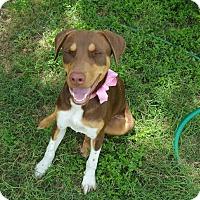 Adopt A Pet :: Charlotte - San Antonio, TX