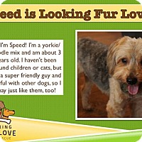 Adopt A Pet :: Speed - Baton Rouge, LA
