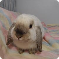 Adopt A Pet :: Finn - Hillside, NJ