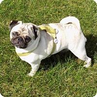 Adopt A Pet :: Bruno - Omaha, NE