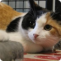 Adopt A Pet :: Judith - Caistor Centre, ON