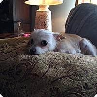 Adopt A Pet :: Lady - N. Babylon, NY