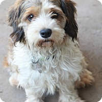 Adopt A Pet :: Falana - Woonsocket, RI