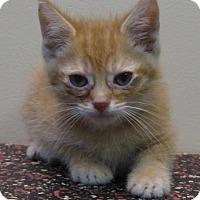 Adopt A Pet :: Jason - Gary, IN
