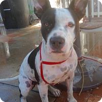 Adopt A Pet :: Venice (BH) - Santa Ana, CA