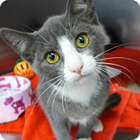 Adopt A Pet :: Thyme 32029826 - Westampton, NJ