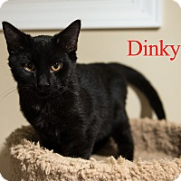 Domestic Shorthair Kitten for adoption in Baltimore, Maryland - Dinky