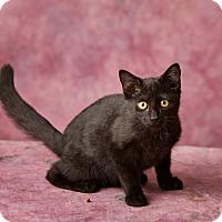 Adopt A Pet :: Irusan - Harrisonburg, VA