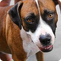 Adopt A Pet :: Mabel - Allen, TX