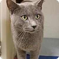 Adopt A Pet :: The Purrinator - Harrisonburg, VA